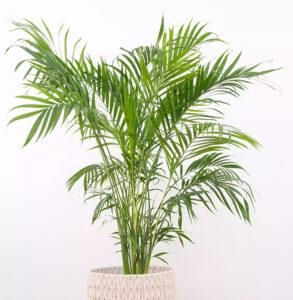 Pet Friendly Apartment Plants